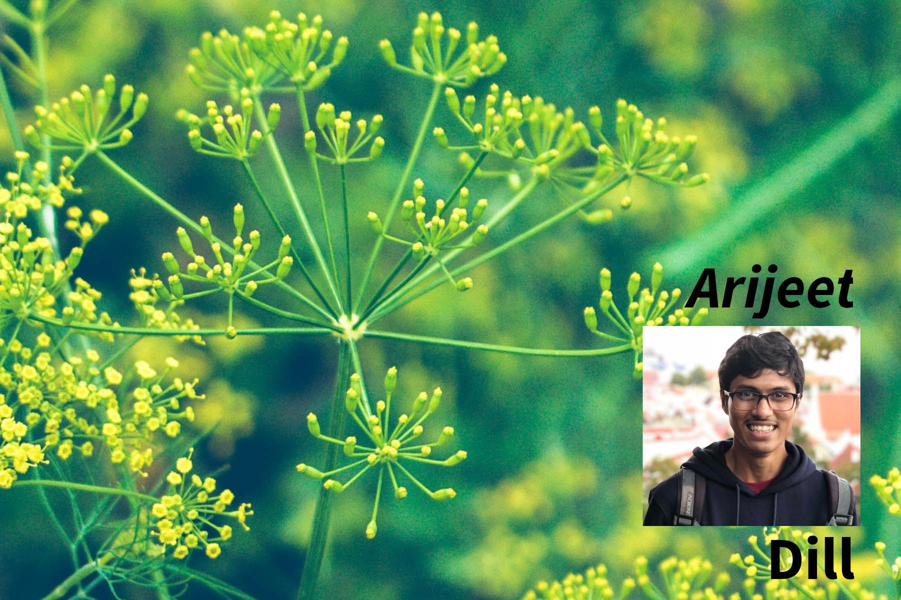 Arijeet & Dill