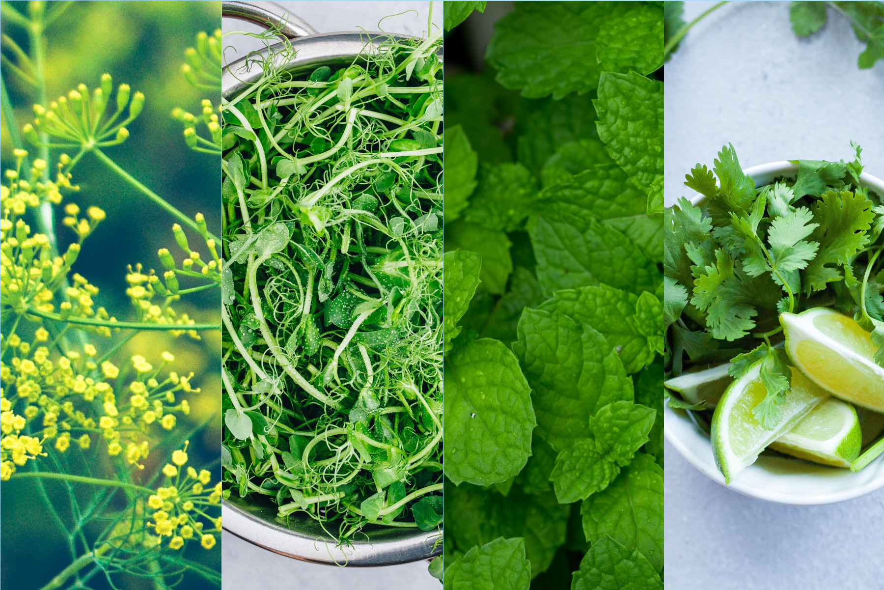 Our 4 Favorite EcoGarden Herbs and How to Use Them